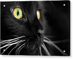Black Cat 2 Acrylic Print