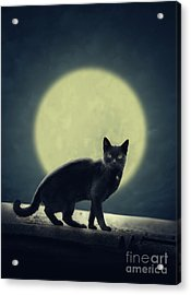 Black Cat And Full Moon Acrylic Print