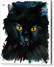 Black Cat Acrylic Print by Christy  Freeman
