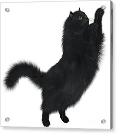 Black Cat Acrylic Print by Corey Ford