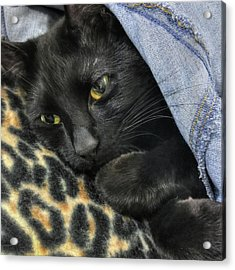 Black Cat Fashion- Leopard And Denim Acrylic Print