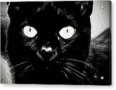 Black Cat Acrylic Print by Gina O'Brien