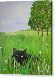Black Cat In A Meadow Acrylic Print