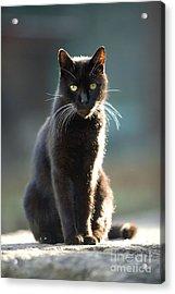 Black Cat Acrylic Print by Jean-Michel Labat