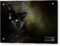 Black Cat Portrait Acrylic Print