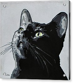 Black Cat Acrylic Print by Slade Roberts