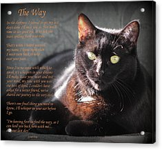 Black Cat The Way Acrylic Print