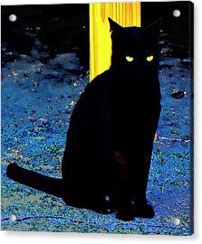 Black Cat Yellow Eyes Acrylic Print