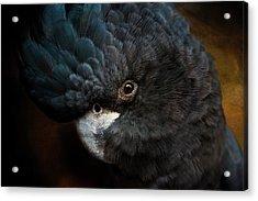Black Cockatoo Acrylic Print