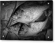 Black Crappie Panfish With Fish Filet Knife In Black And White Acrylic Print