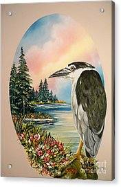 Flying Lamb Productions                     Black Crowned Heron Acrylic Print