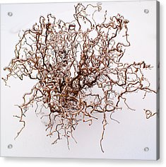 Black Death Virus Acrylic Print by Douglas Barnett