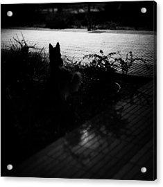 Black Dog  #dog #animal #pet #portrait Acrylic Print