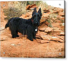 Black Dog Red Rock Acrylic Print