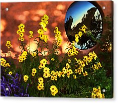 Black-eyed Susans And Adobe Acrylic Print by Paul Cutright