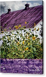 Acrylic Print featuring the photograph Black Eyed Susans by Polly Peacock