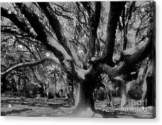 Black Forest Acrylic Print by David Lee Thompson