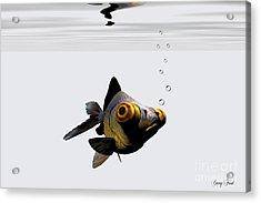 Black Goldfish Acrylic Print by Corey Ford