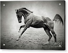 Black Horse In Dust Acrylic Print