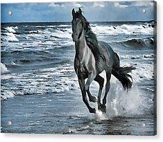 Black Horse Running Through Water Acrylic Print by Lanjee Chee