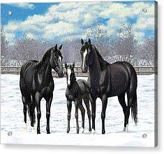 Black Horses In Winter Pasture Acrylic Print