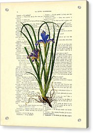 Black Iris Antique Illustration On Dictionary Page Acrylic Print