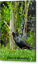 Black Is Beautiful Acrylic Print by DazzleMe Photography