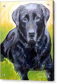 Black Lab Pet Portrait Acrylic Print