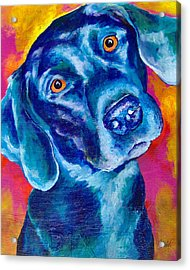Black Lab Pop Art Acrylic Print