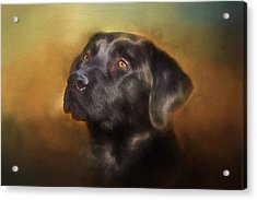 Black Lab Portrait 2 Acrylic Print