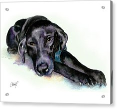 Black Lab Stretching Out Acrylic Print