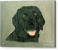 Black Labrador Retriever Acrylic Print by Terri Mills