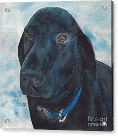Black Labrador With Copper Eyes Portrait II Acrylic Print