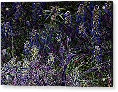 Black Light Wildflowers Acrylic Print by Linda Phelps