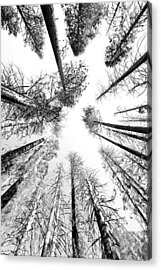 Black N White Sky-trees Acrylic Print by Rick Pham