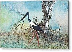 Black Neck Stork  Acrylic Print by Manjot Singh Sachdeva