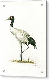 Black Necked Crane Acrylic Print