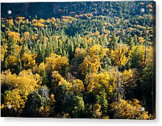 Acrylic Print featuring the photograph Black Oaks Turning by Alexander Kunz
