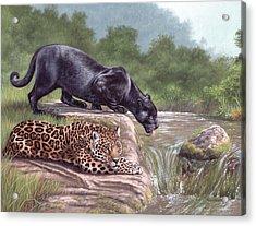 Black Panther And Jaguar Acrylic Print
