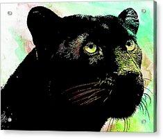 Black Panther Animal Art Acrylic Print