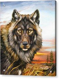 Black Phase Wolf Acrylic Print by Martin Katon