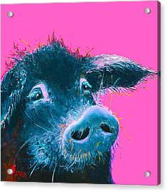 Black Pig Painting On Pink Background Acrylic Print
