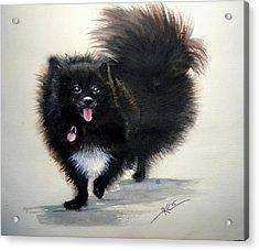 Black Pomeranian Dog 3 Acrylic Print