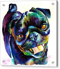 Black Pug Acrylic Print