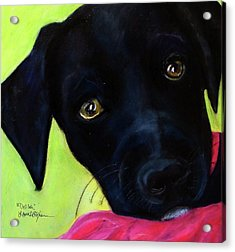 Black Puppy - Shelter Dog Acrylic Print