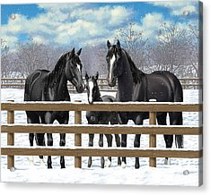 Black Quarter Horses In Snow Acrylic Print by Crista Forest