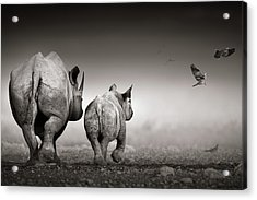 Black Rhino Cow With Calf  Acrylic Print