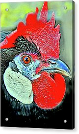 Black Rooster. Acrylic Print