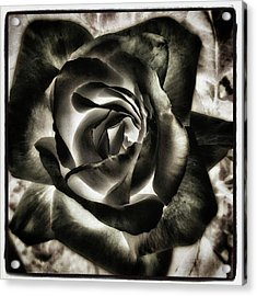 Acrylic Print featuring the photograph Black Rose. Symbol Of Farewells by Mr Photojimsf