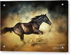 Black Stallion Horse Galloping Like A Devil Acrylic Print